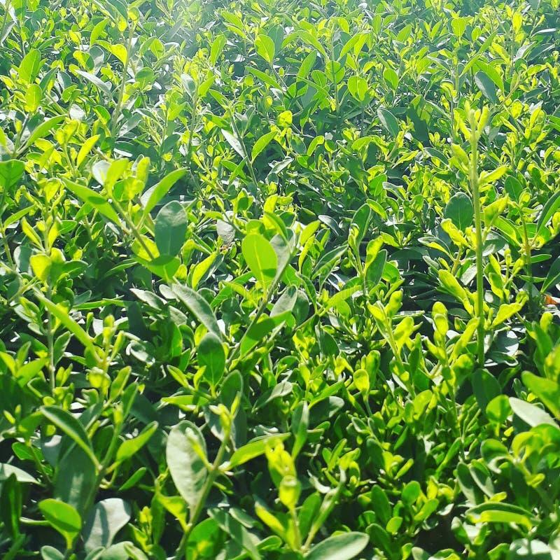 Feuilles de pelouse Sun-embrassées images libres de droits