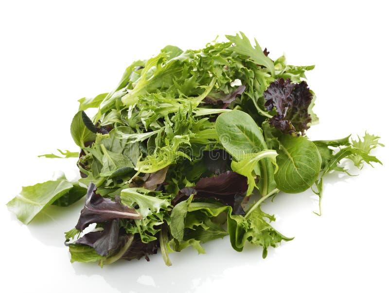 Feuilles de salade photographie stock libre de droits