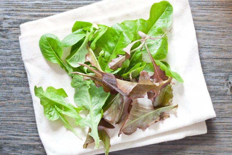 Download Feuilles de salade de bébé image stock. Image du agriculture - 45358151