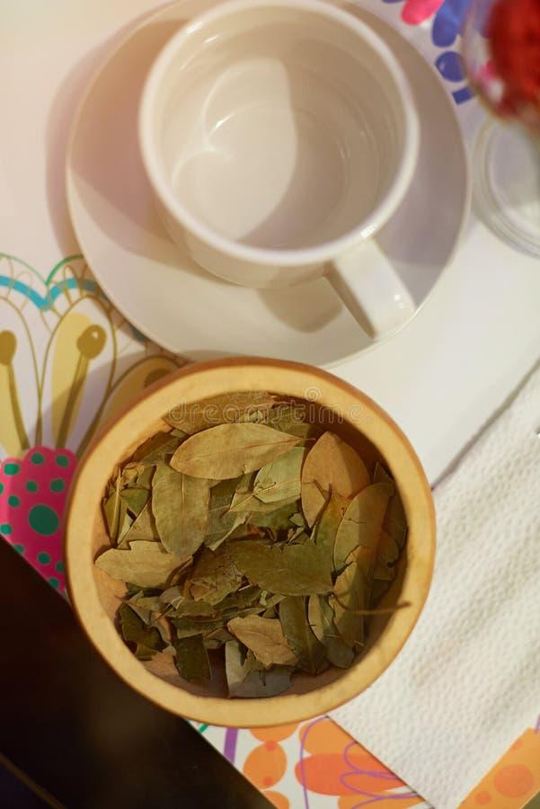Feuilles de thé de coca photo libre de droits