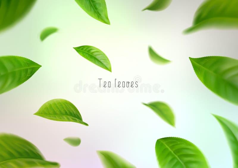 feuilles de thé 3d d'isolement réalistes entourant dans un tourbillon illustration stock