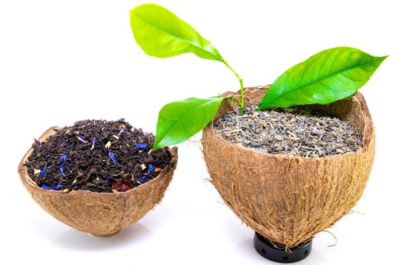 Feuilles de thé noires et vertes sèches sur l'écorce de noix de coco d'isolement sur le fond blanc images libres de droits