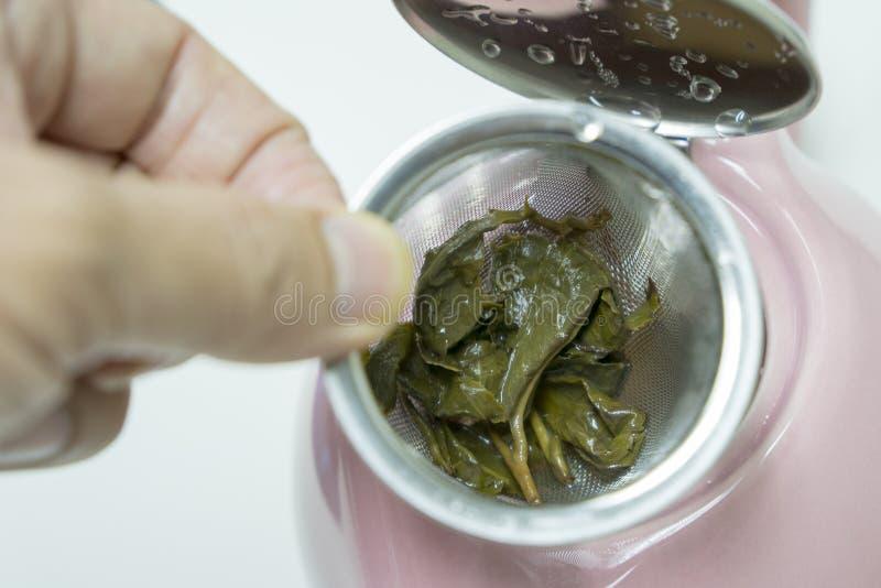 Feuilles de thé utilisées dans la bouilloire et les mains photo stock