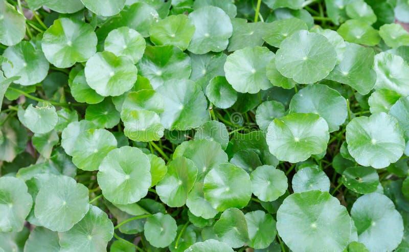 Feuilles de vert à l'arrière-plan et aux textures de nature photographie stock libre de droits