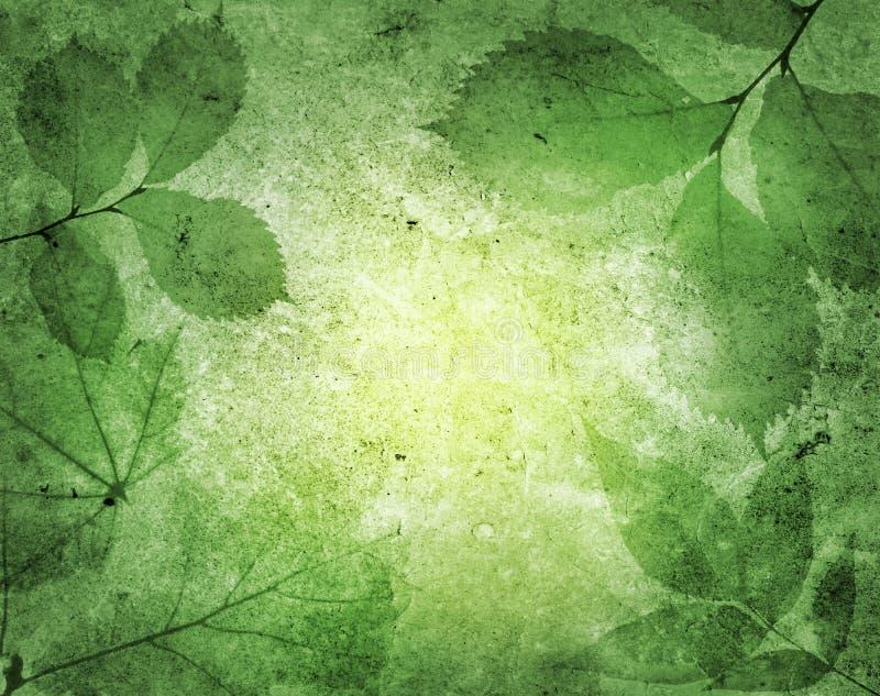 Feuilles de vert photo stock