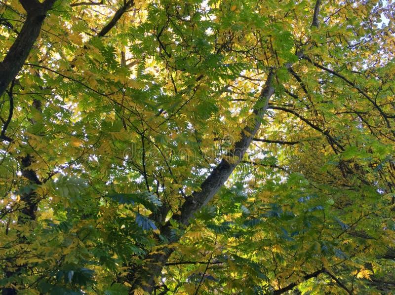 Feuilles de vert avec des troncs d'arbre images stock
