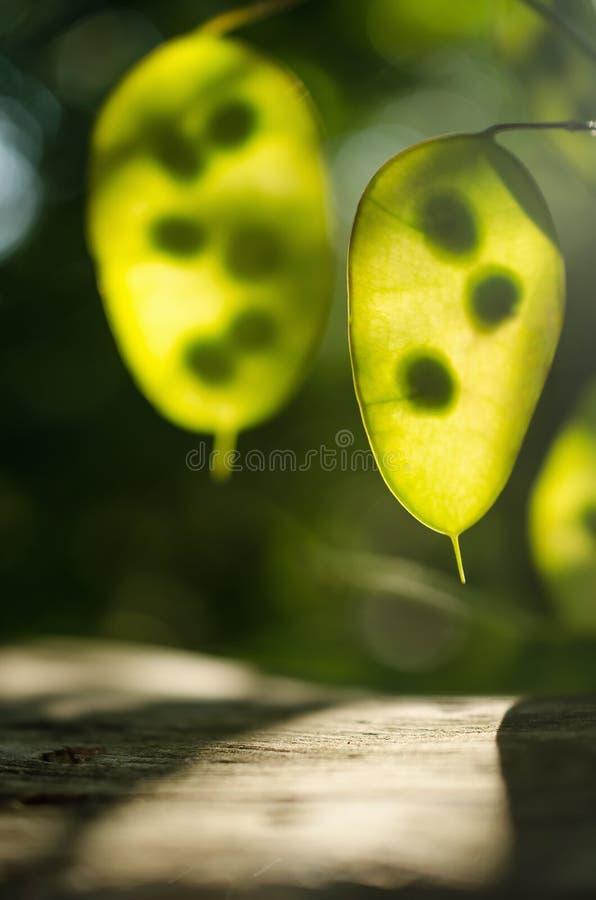 Feuilles de vert avec le contre-jour de Sun photographie stock libre de droits