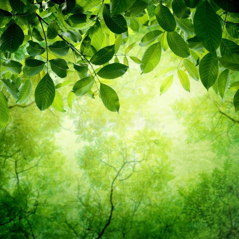 Feuilles de vert avec le soleil image stock