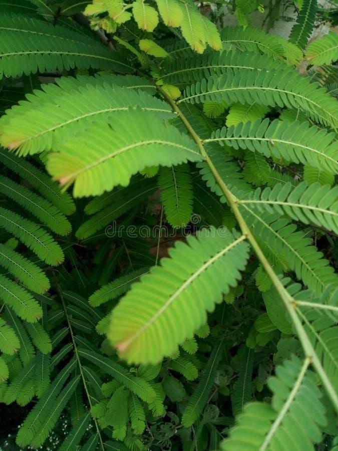 Feuilles de vert de Beautifu dans la saison d'hiver photo stock