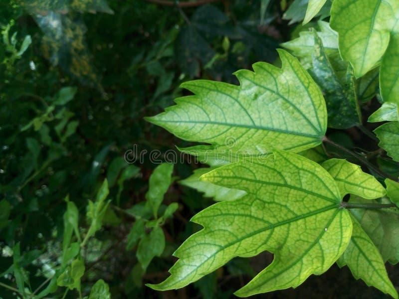 Feuilles de vert de Beautifu dans la saison d'hiver image stock