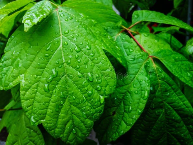 Feuilles de vert couvertes de gouttes de pluie image stock