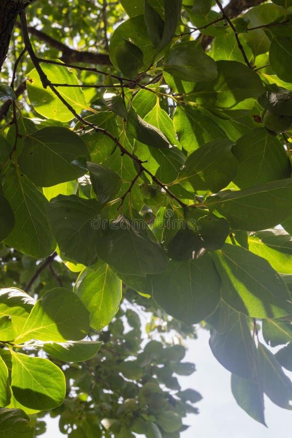 Feuilles de vert dans le ciel photo stock