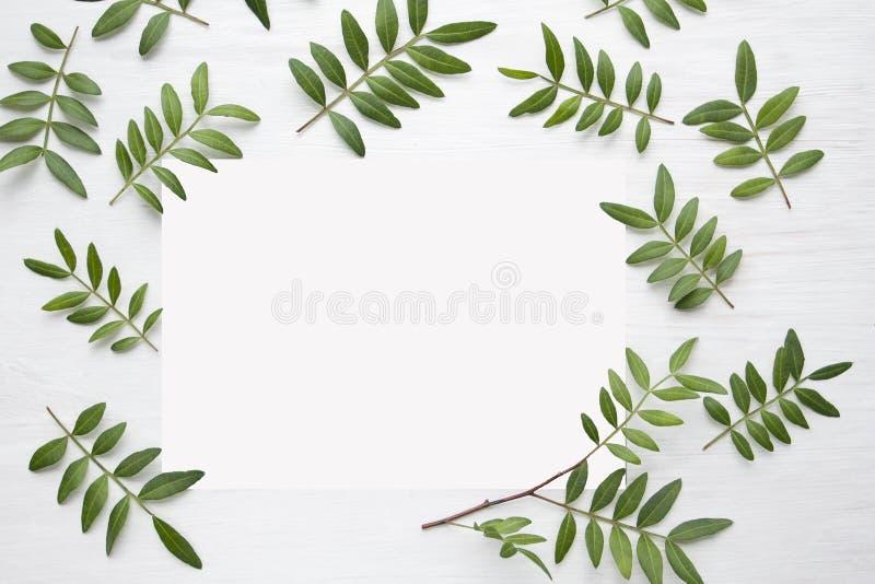 Feuilles de vert des pistaches sur un fond en bois blanc image libre de droits