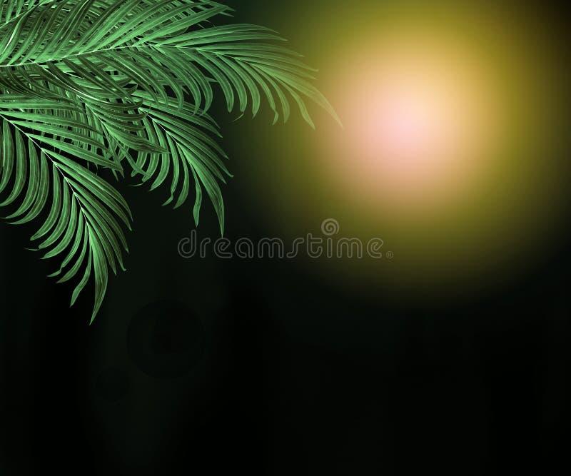 Feuilles de vert de palmier sur le fond noir photos stock
