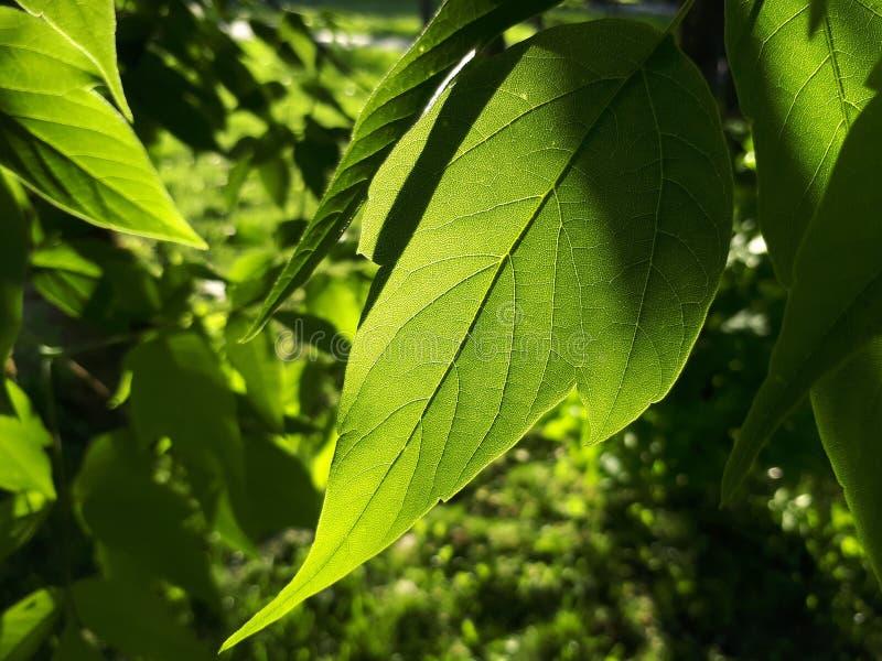 Feuilles de vert sous le soleil images stock