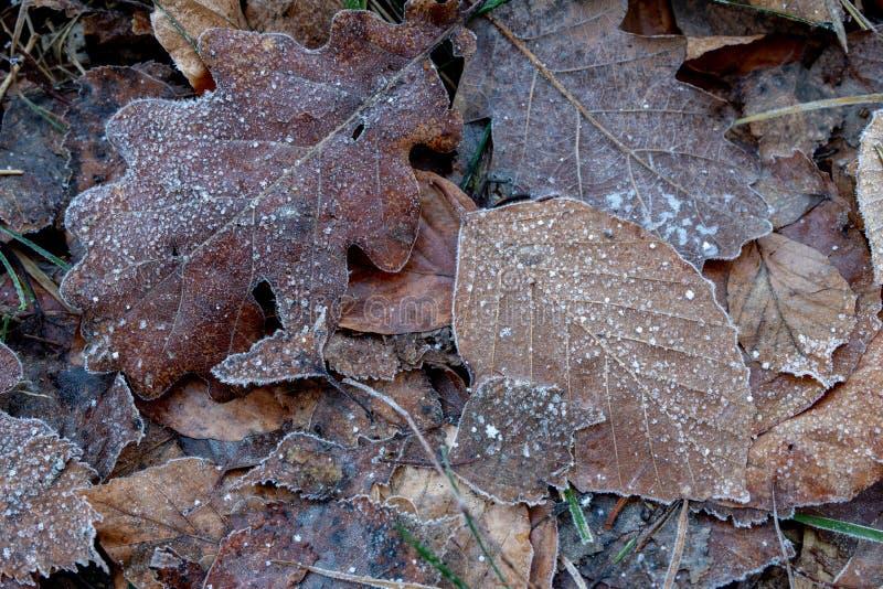 Feuilles des arbres couverts de gel de matin de gel sur la forêt photo stock
