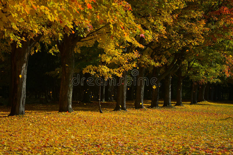 Download Feuilles En Baisse Colorées Image stock - Image du orange, automne: 77155239