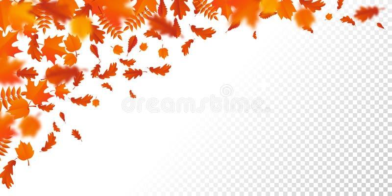 Feuilles en baisse d'autumanl de modèle de chute de feuille d'automne sur le fond transparent de vecteur illustration de vecteur