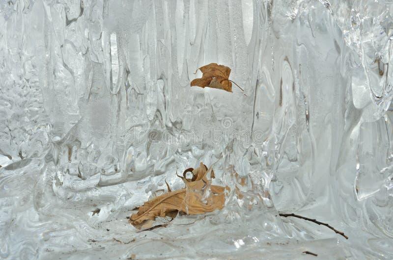 Feuilles en glace de fonte 1 photo libre de droits