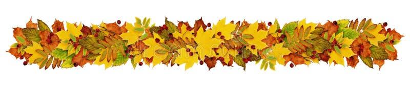 Feuilles et baies colorées de fron de guirlande d'automne illustration stock
