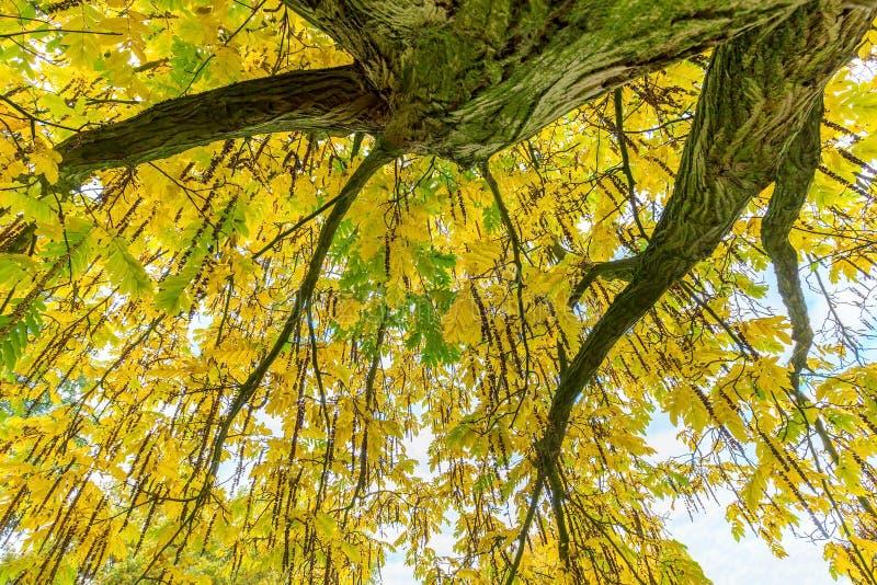 Feuilles et branches d'arbre de dessous dans la chute photographie stock libre de droits
