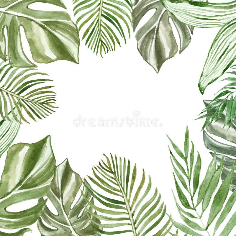 Feuilles et branches tropicales d'aquarelle sur le fond blanc avec l'espace pour le texte Cadre exotique de plantes vertes illustration de vecteur