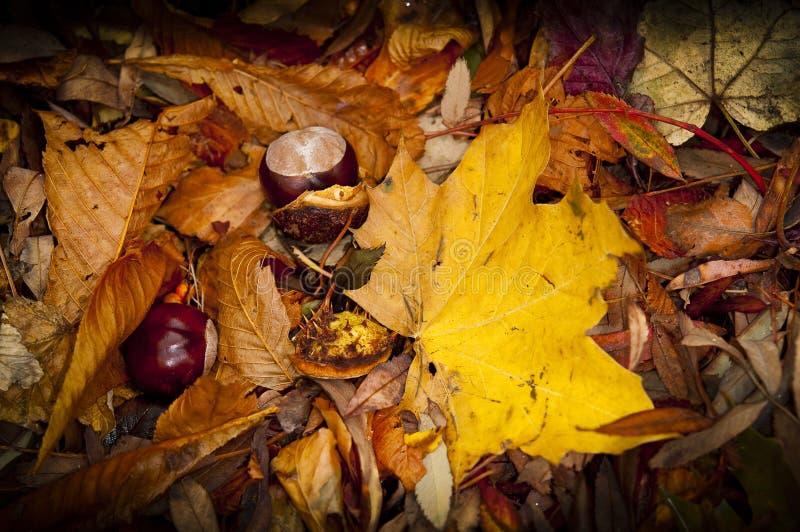 Feuilles et châtaignes d'Autumn Fall photo stock