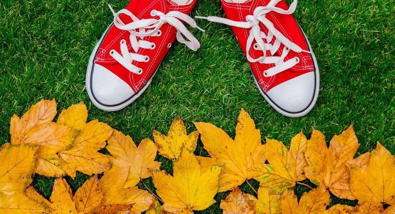 Feuilles et chaussures en caoutchouc d'or d'érable d'automne image libre de droits