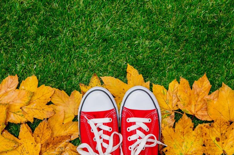 Feuilles et chaussures en caoutchouc d'or d'érable d'automne photos libres de droits