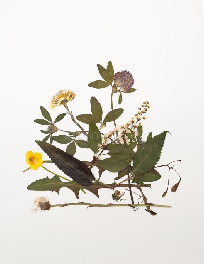 Feuilles et fleurs sèches des herbes médicinales de pré images libres de droits