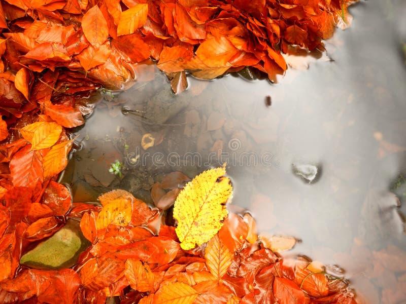 Feuilles et pierres tombées de hêtre dans l'eau de la rivière de montagne Autumn Colors Symbole images stock
