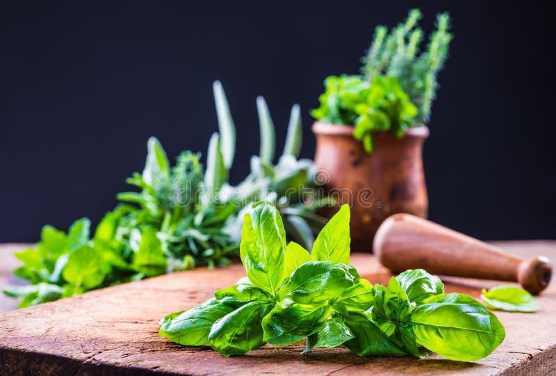 Feuilles fraîches de basilic et herbes fraîches images libres de droits