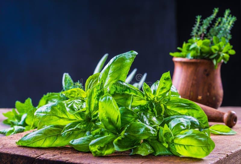 Feuilles fraîches de basilic et herbes fraîches photographie stock
