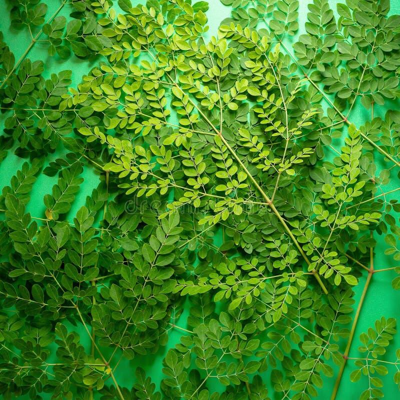 Feuilles fraîches de vert de Moringa sur le balckground vert images stock
