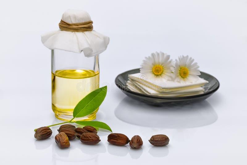 Feuilles, graines et pétrole chinensis de Simmondsia de jojoba images libres de droits