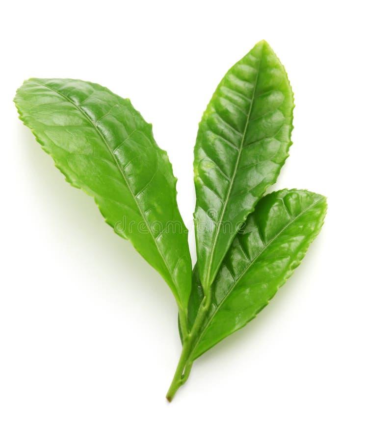Feuilles japonaises de flux de thé vert d'abord photographie stock