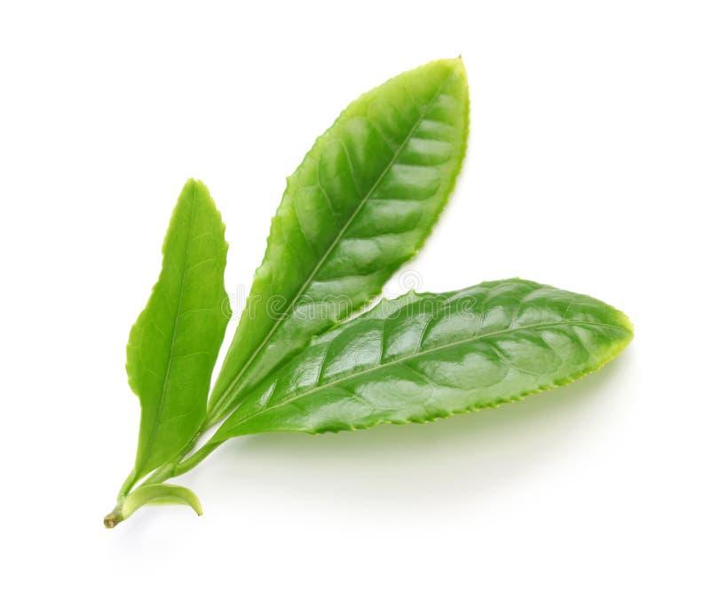 Feuilles japonaises de flux de thé vert d'abord images libres de droits