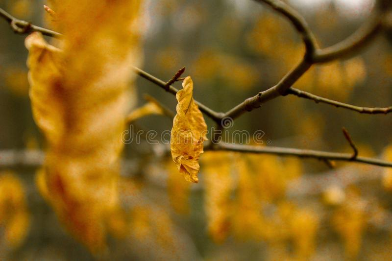 Feuilles jaunes photographie stock libre de droits