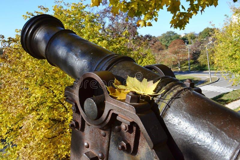 Feuilles jaunes d'érable sur le canon antique photographie stock libre de droits