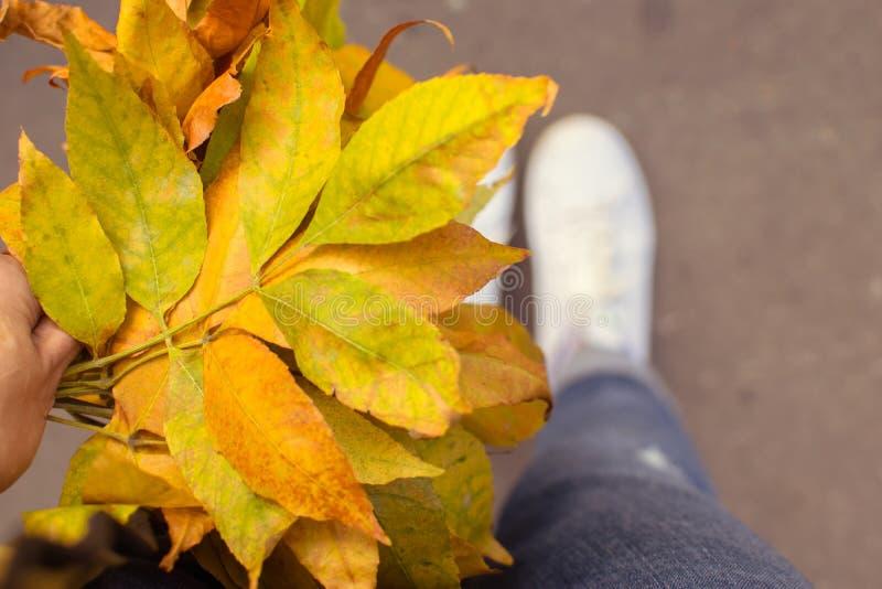 Feuilles jaunes dans une main Humeur d'automne image stock