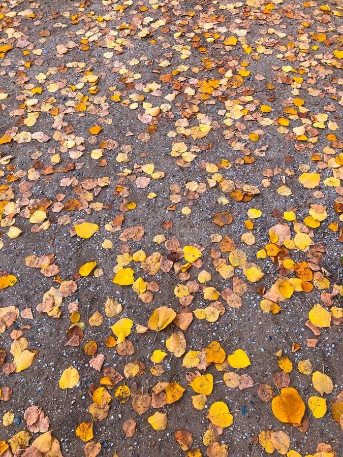 Feuilles jaunes sur le plancher, fond coloré de feuillage d'automne - images stock