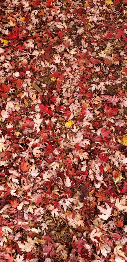 Feuilles image stock