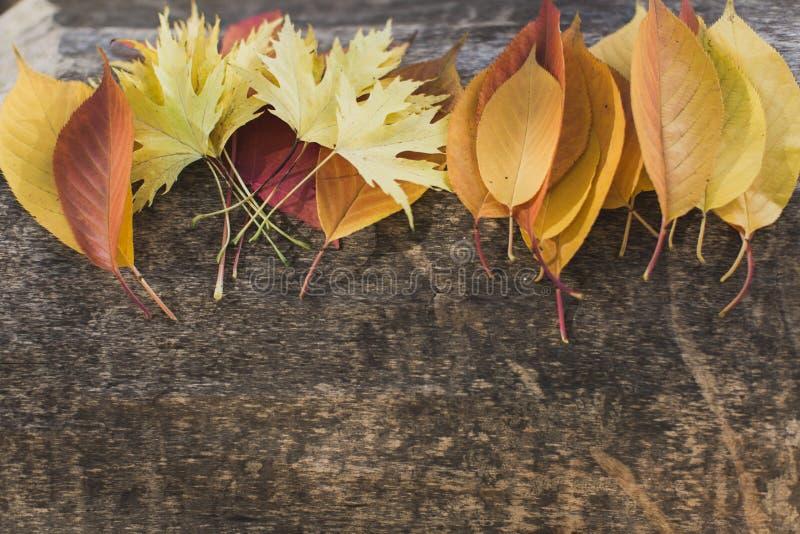 Feuilles lumineuses se trouvant sur l'arbre photographie stock
