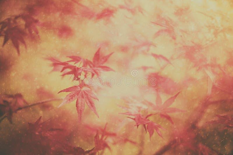 Feuilles magiques d'érable d'automne de couleur avec des gouttes de pluie image stock
