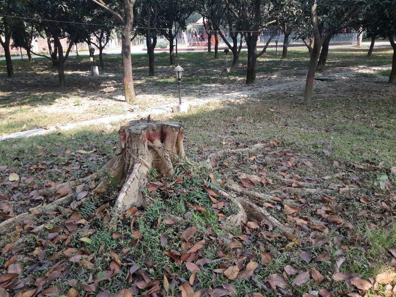 Feuilles mortes dans le campus images stock