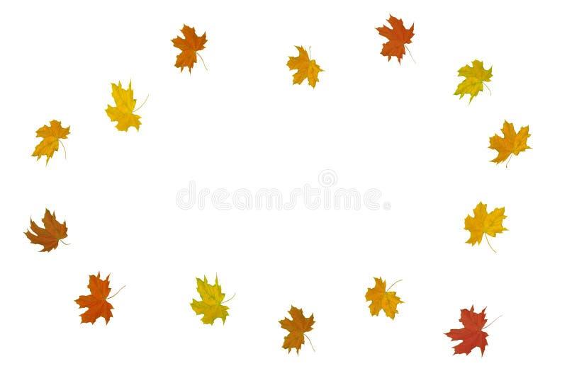 Feuilles multicolores d'érable sur un fond blanc photos libres de droits