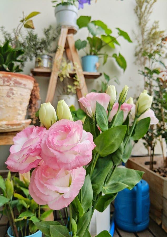 Feuilles roses de fleur et de vert dans un petit jardin complètement des plantes et des fleurs photo libre de droits