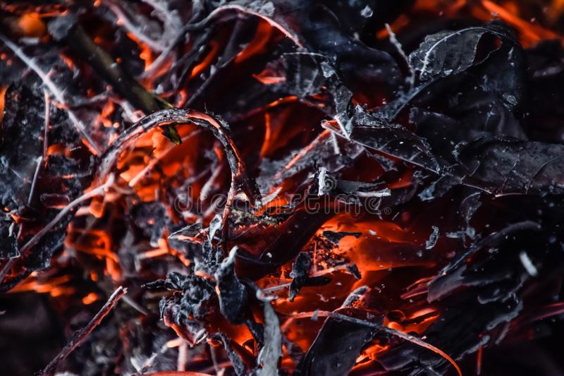 Feuilles sèches de brûlure du feu image libre de droits