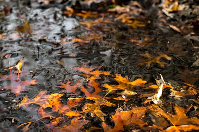 Feuilles s?ches flottant sur la surface de l'eau photos stock