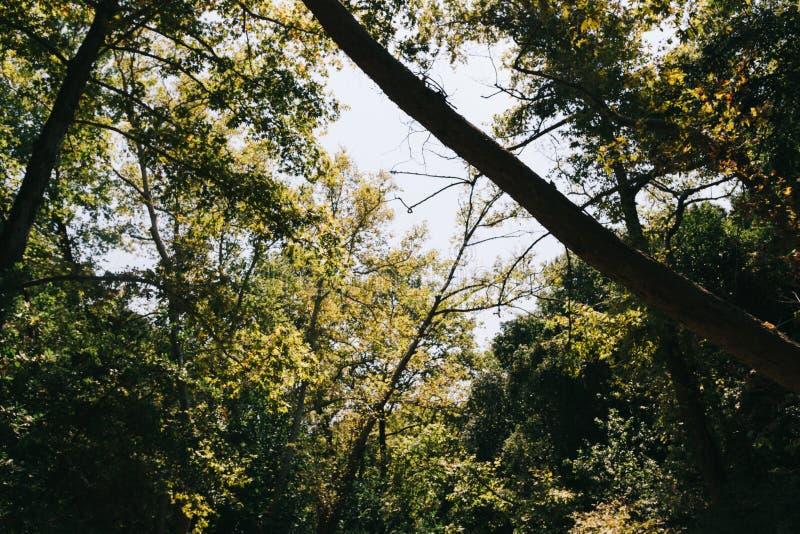 Feuilles sur de grands arbres contre le ciel photographie stock libre de droits